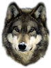 wolf_256_003.png